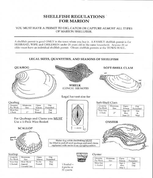 marion shellfish guide